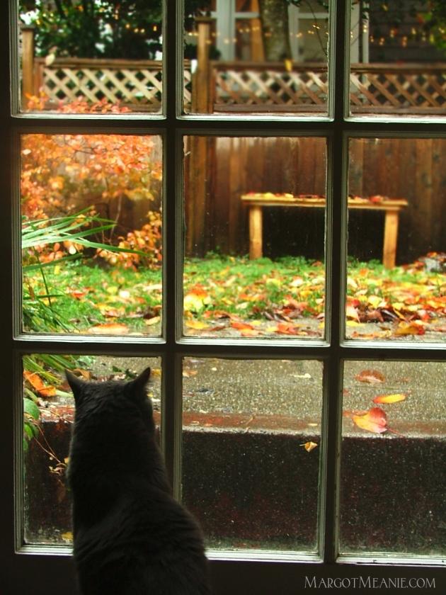 Ashworth looking outside
