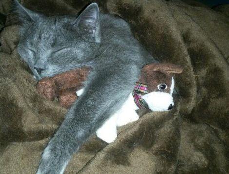 Detective Ashworth Grimes and his snuggle buddy