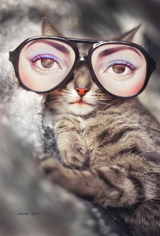 They'll never know you're napping with these glasses // Caturday #05 // margotmeanie.com
