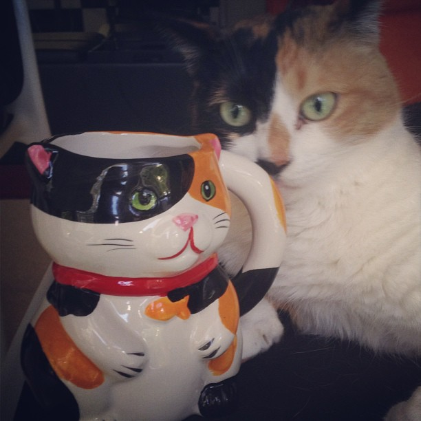 one of Horitomos kitties