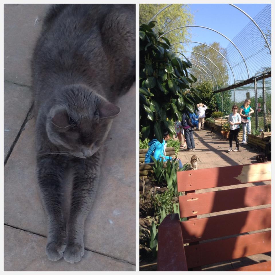 raps 5R.A.P.S. // Cat Sanctuary // Caturday #09 // margotmeanie.com