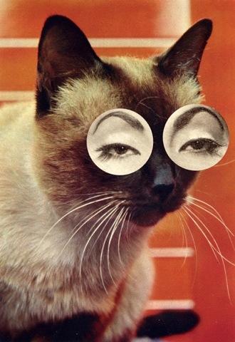 (Ma + Chr) // caturday #12