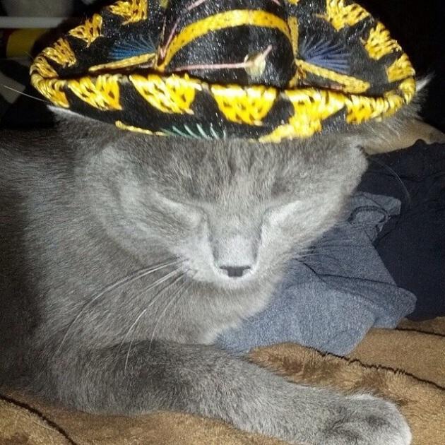 // caturday #19 //  Detective Ashworth Grimes // margotmeanie.com