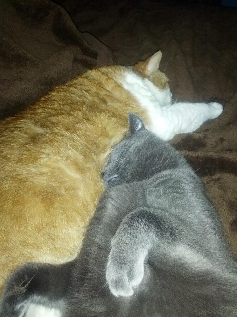 // caturday #19 //  Miss Bean snugs with Ashworth // margotmeanie.com